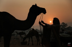 An Indian camel trader standing with a camel is silhouetted against the setting sun at the annual cattle fair in Pushkar, western Rajasthan state, India, Monday, Nov. 16, 2015. Pushkar is a popular Hindu pilgrimage spot that is also frequented by foreign tourists who come to the town for its annual cattle fair.(AP Photo/Deepak Sharma)