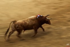 A fighting bull runs after bullfighters during a bullfight at Las Ventas bullring in Madrid, Spain, Sunday, June 28, 2015. Bullfighting is a traditional spectacle in Spain and the season runs from March to October. (AP Photo/Andres Kudacki)