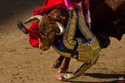 Bullfighter Tomas Angulo is tossed by bull during a bullfight at Las Ventas bullring in Madrid, Spain, Sunday, April 19, 2015. Bullfighting is a traditional spectacle in Spain and the season runs from March to October. (AP Photo/Andres Kudacki)