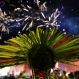 A Brazilian Bororo indigenous attends the closing ceremony of the World Indigenous Games, in Palmas, Brazil, Saturday, Oct. 31, 2015. The first edition of the World Indigenous Games, which brought nearly 2,000 delegates representing first nations from across the globe to a remote outpost in the heart of Brazil, was wrapping up on Saturday after nine hypnotic days of traditional sports, dancing, trading and inter-cultural exchange.(AP Photo/Eraldo Peres)