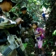 """A counternarcotics special forces police officer gifts powdered milk to a girl returning from school, after the police patrol destroyed an illegal coca laboratory or maceration pond, in Tingo Maria, Peru, Monday, Oct. 26, 2015. According to the police, most labs are simple operations where only the basic chemicals like acid, quick lime and gasoline are used to turn coca leaves into paste. The paste is later transported in 11 kilo backpacks called """"costales,"""" to another lab to be turned into cocaine. (AP Photo/Rodrigo Abd)"""