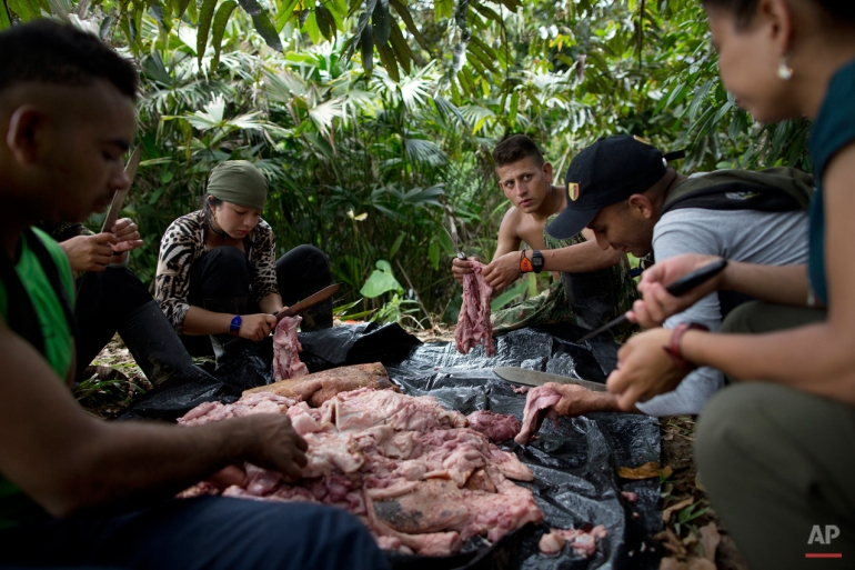In this Jan. 4, 2016 photo, rebel soldiers of the 36th Front of the Revolutionary Armed Forces of Colombia, or FARC, work together to flay the skin of a hog carcass, near their hidden camp in Antioquia state, in the northwest Andes of Colombia. Many of the FARC's roughly 7,000 fighters come from the most-modest of campesino upbringings and struggle to imagine themselves outside regimented camp life. (AP Photo/Rodrigo Abd)