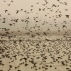 In this Dec. 6, 2015 photo, migratory birds fly above wetlands in Hokersar, about 16 kilometers (10 miles) north of Srinagar, Indian controlled Kashmir. The cackle and cry of Kashmir's annual bird migration has long been a welcome ruckus for those living in the Indian-controlled Himalayan territory. It signals the summer's end, the coming snows and the global importance of Kashmir's environment for species arriving from as far as northern Europe and Japan. But these days, wildlife experts say they have never seen so few birds - and so few species - feeding and breeding around the wetlands nestled between the region's mountain peaks and plateaus. (AP Photo/Mukhtar Khan)