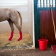 A horse stands in a stall after leg surgery at the Hebrew University's Koret School of Veterinary Medicine in Rishon Lezion, Israel Sunday, Dec. 6, 2015. Veterinarians at the hospital operate on about two dozen horses a month and rely on elaborate tools and an army of volunteers to safely treat animals that can weigh more than 1,000 pounds (450 kilograms). (AP Photo/Oded Balilty)