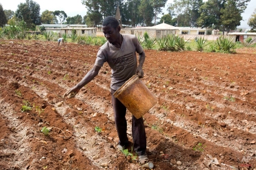 In this Feb. 15, 2016 photo, Roodymanche Lomane plants potatoes in his small vegetable plot, in Oriani, Haiti. A strong El Nino weather phenomenon that's been disrupting weather patterns across the globe, is leaving many places in Latin America and the Caribbean stricken by drought. (AP Photo/Dieu Nalio Chery)