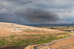A flock of migrating starlings flies next to the southern Israeli Bedouin village of Rahat, Wednesday, Feb. 10, 2016. (AP Photo/Oded Balilty)