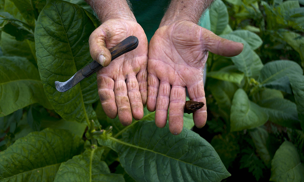 Cuba's Tobacco Country Becomes TouristAttraction