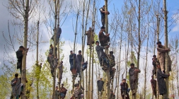 Kashmiri Muslims climb trees to watch the funeral procession of Waseem Malla, a suspected militant of Hizbul Mujahideen, in Pehlipora, some 60 kilometers (35 miles) south of Srinagar, Indian controlled Kashmir, Thursday, April 7, 2016. Anti-India protesters attacked government forces with rocks and burned an armored vehicle Thursday as they participated in the funerals of two insurgents killed in a gunbattle in the disputed Kashmir region, an Indian official said. (AP Photo/Dar Yasin)