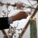 A man lights a candle to mourn for victims of the 2011 earthquake and tsunami prior to a special memorial event in Tokyo Friday, March 11, 2016. Japanese gathered in Tokyo and along the country's ravaged northeast coast to observe a moment of silence at 2:46 p.m. Friday, exactly five years after a powerful earthquake struck offshore and triggered a devastating tsunami that killed more than 18,000 people. (AP Photo/Eugene Hoshiko)