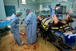 """In this Wednesday, Dec. 2, 2015 photo, veterinarians and students operate on a horse with a broken leg at the Hebrew University's Koret School of Veterinary Medicine in Rishon Lezion, Israel. """"They are not good patients,"""" said Dr. Gal Kelmer, who heads the large animal department. """"I get a lot of satisfaction when things work."""" (AP Photo/Oded Balilty)"""