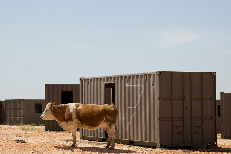 Israel's Golan Cowboys