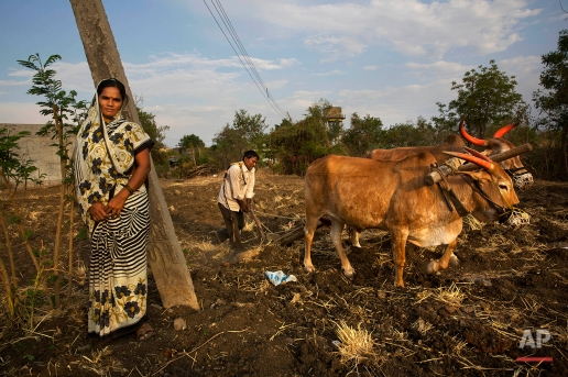In this May 10, 2016, photo, Nita Balasaheb Jadav stands by as her husband Bala Sahib Jadav ploughs his field in anticipation of good monsoon rains on the outskirts of Latur in the Indian state of Maharashtra. (AP Photo/Manish Swarup)
