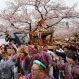 Participants carry a portable shrine while parading under cherry blossoms in Yokohama, near Tokyo Sunday, April 3, 2016. People all over the country go out to see cherry blossoms this weekend as the country's iconic flower is in full bloom. (AP Photo/Shuji Kajiyama)