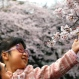 """In this Sunday, April 3, 2016 photo, a girl is held as she looks at a cherry blossom in Ueno Park in Tokyo. Japan's cherry blossoms, or """"sakura"""" in Japanese, never cease to inspire. The gnarled trees bloom before they have leaves, their thin branches spilling over with delicate pink-white blossoms and nothing else. (AP Photo/Shizuo Kambayashi)"""