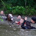 Justin Nelzen, in red vest, joins others as they work to rescue up to 70 horses along Cypresswood Drive near Humble along Cypress Creek, Monday, April 18, 2016, in Houston. More than a foot of rain fell Monday in parts of Houston, submerging scores of subdivisions and several major interstate highways, forcing the closure of schools and knocking out power to thousands of residents who were urged to shelter in place. (Mark Mulligan/Houston Chronicle via AP)