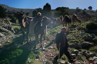 In this Tuesday, May 17, 2016 photo, Hasan Bacak leads the way for the camels while walking through the mountains, near the village of Tavsancibagi, south Turkey. Every spring Bacak, his wife, Emine, and their 1-year old son, Mehmet, migrate for weeks in search of higher ground for their livestock to graze. (AP Photo/Bram Janssen)