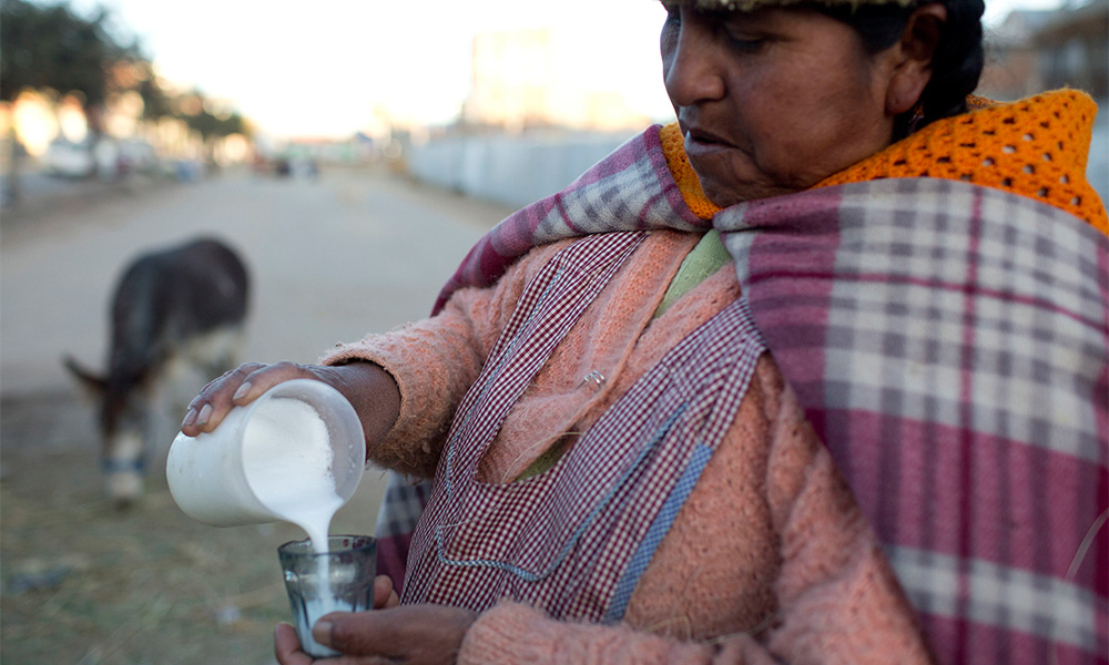 Bolivia's Donkey Milk