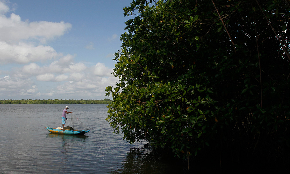 Sri Lanka To Protect Mangroves