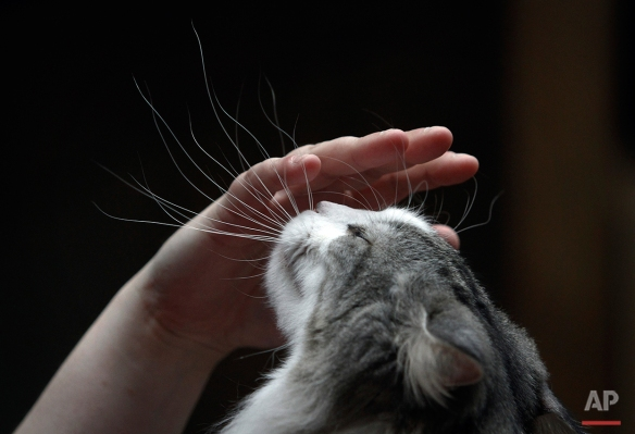 A woman pets her cat during the International Cat Exhibition in Sofia, Saturday, April 30, 2011. (AP Photo/Valentina Petrova)