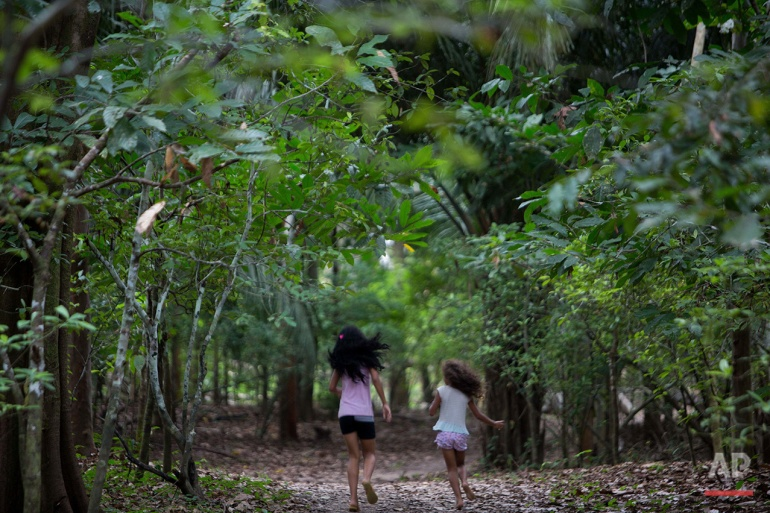 In this June 22, 2016 photo, girls run amidst a plantation of Chacrona (Psychotria viridis) one of the components of an ancient psychedelic tea locals know as the Holy Daime in Ceu do Mapia, Amazonas state, Brazil. In the early 1980s a rubber tapper named Sebastiao Mota de Melo, nicknamed Godfather Sebastiao, took hundreds of followers deep into the forest to create Ceu do Mapia, a new village that would live by the Ayahuasca tea doctrine. (AP Photo/Eraldo Peres)