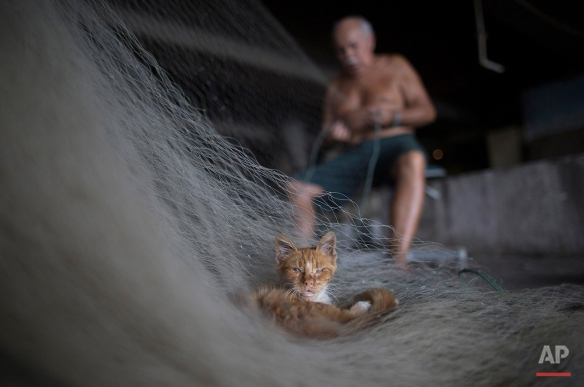 In this Feb. 28, 2015 photo, a street cat that survives on fish scraps nestles on a net being repaired by Manuel Batista de Moraes at the dock in the Vila Pinheiro slum, part of the Mare complex in Rio de Janeiro, Brazil.  (AP Photo/Leo Correa)