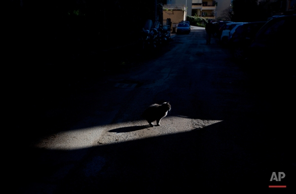 A cat stops and warm up under the sunlight, in Rome, Monday, Dec. 8, 2014. (AP Photo/Alessandra Tarantino)