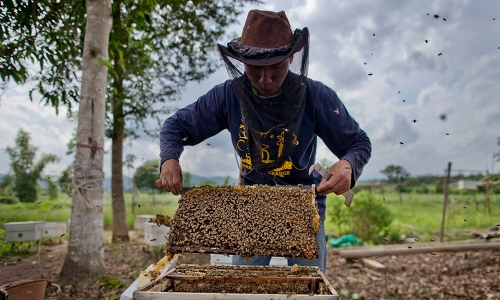 In this Thursday, Aug. 18, 2016 photo, a researcher of the Thai Department of National Parks checks the quality of beehives before installing them around a perimeter of a  small farm in hopes of discouraging wild elephants from intruding on local properties in Pana, southeastern province of Chanthaburi, Thailand.  To stop wild elephants rampaging through their crops, farmers are trying a pilot scheme run by the Thai Department of National Parks that is deploys bees as a new line of defense, exploiting elephants' documented fear of bee stings. (AP Photo/Gemunu Amarasinghe)