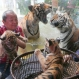"""Malabon Zoo owner Manny Tangco holds tiger cub """"Tiger Duterte"""" while """"Tiger Leni"""" stays in the basket as parents """"Tiger Cory, right,"""" and """"Tiger Ninoy"""" play in their glass cage behind them, Thursday, July 14, 2016, at Malabon city, north of Manila, Philippines. """"Tiger Duterte"""" and """"Tiger Leni"""", which are presented to the media for the first time, were named after the country's new President and Vice-president respectively and are the offsprings of """"Tiger Cory"""" and """"Tiger Ninoy,"""" named after the parents of former President Benigno Aquino III. (AP Photo/Bullit Marquez)"""