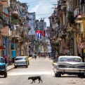 A dog crosses a street adorned with a Cuban flag and a 26-July movement flag in downtown Havana, Cuba, Tuesday, July 26, 2016. Cuba marks the anniversary of the July 26, 1953 rebel attack led by Fidel and Raul Castro on the Moncada military barracks. The attack is considered the beginning of the revolution that culminated with dictator Fulgencio Batista's ouster. (AP Photo/Desmond Boylan)