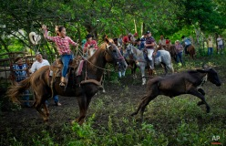 In this July 29, 2016 photo, cowgirl Dariadna Corujo winds up to lasso a calf during an improvised rodeo event at a farm in Sancti Spiritus, central Cuba. At the tender age of 6, Dariadna is already an expert barrel racer and calf roper. In the flat grasslands of Sancti Spiritus, a group of neighboring cattle ranchers founded a non-governmental organization called Future Ranchers more than a decade ago to revive Cuba's rodeo culture, which dates back centuries to Spanish colonial times. (AP Photo/Ramon Espinosa)