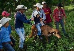 In this July 29, 2016 photo, cowboys team up to help 5-year-old cowboy David Obregon learn to ride a calf during an improvised rodeo game at a farm in Sancti Spiritus, central Cuba. In the Cuban countryside, many children learn to ride a horse before they learn to ride a bicycle. In Sancti Spiritus' cattle country, 80 children are enrolled in a non-governmental organization called Future Ranchers, founded by a group of neighboring cattle ranchers more than a decade ago to revive Cuba's rodeo culture. (AP Photo/Ramon Espinosa)