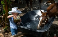 In this July 29, 2016 photo, 2-year-old cowboy Wrangler Ponce pours water into a wheelbarrow serving as a water troff for the horses at his parents farm in Sancti Spiritus, central Cuba. In the Cuban countryside, many children learn to ride a horse before they learn to ride a bicycle as well as skills like roping and riding along with more practical education. Those who grow up to be the best start farm- and ranch-related studies at local universities without passing the difficult national entrance exam. (AP Photo/Ramon Espinosa)